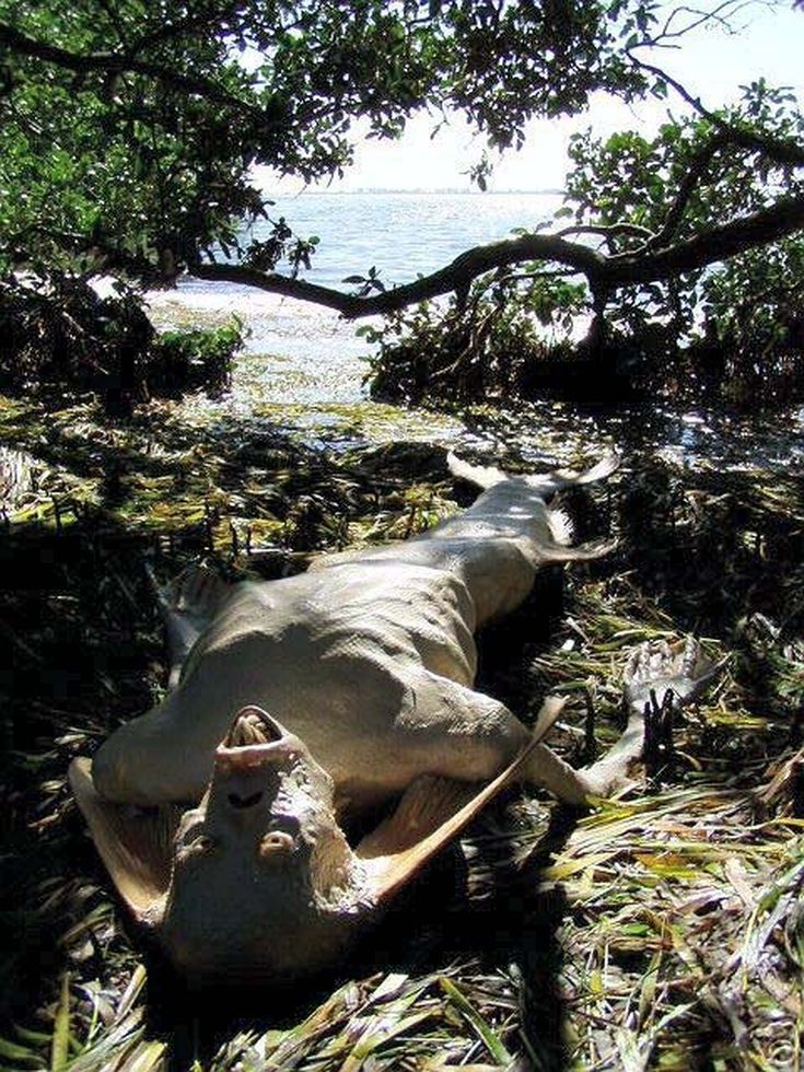 Do These Images Prove That Mermaids Really Exist?: Mermaid / Merman Carcass
