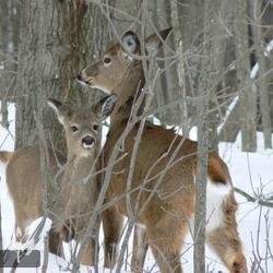 Cottage Country Vacation Rentals. Deer, Lake Nipissing, Ontario. #CDNGetaway