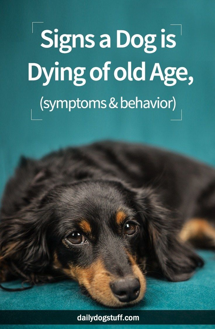 dog old age symptoms dying