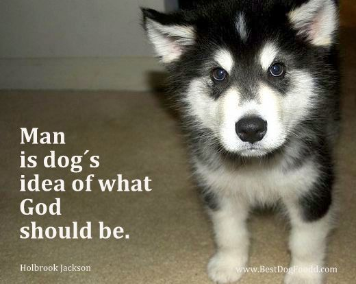 """""""Man is a dog's idea of what God should be.""""  More #dog picture #quotes: http://www.bestdogfoodd.com/poems-about-dogs/"""
