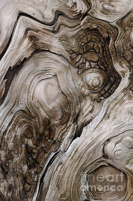Rough driftwood 1 - Fine art abstract photograph