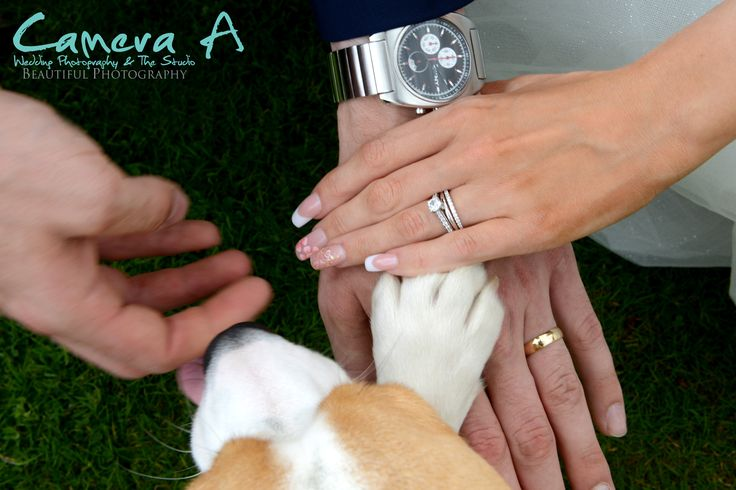 Everyone put their hands in, or in this case their paws too as the bride and grooms dog was a guest at their wedding.