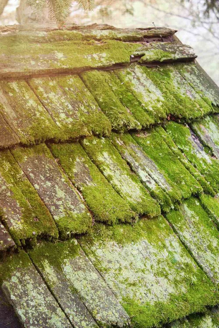 Slate roof & moss. Dont pressure was your surface people ~ let em grow