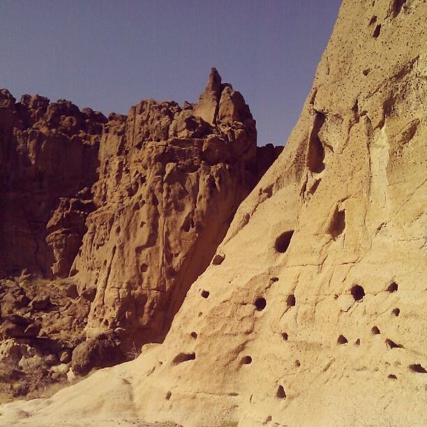 Mojave Desert Native Plants: 17 Best Images About Mojave Desert Living On Pinterest