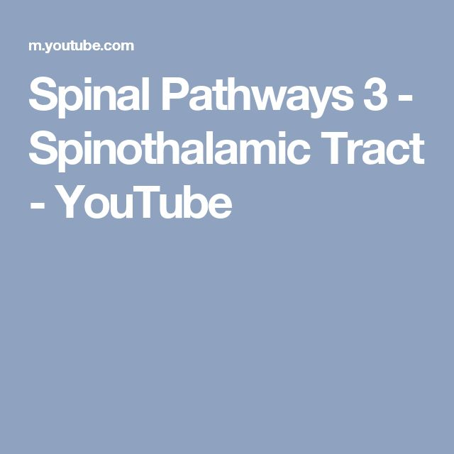 Spinal Pathways 3 - Spinothalamic Tract - YouTube