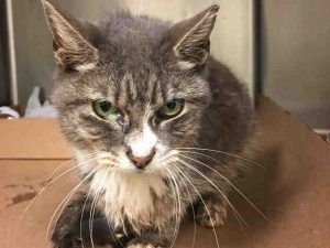 NIVEA IS 8 YRS OLD AND NEEDS RESCUE!