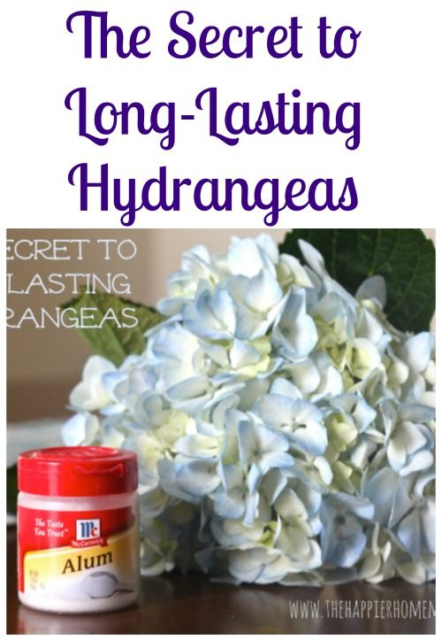 who knew the secret to making hydrangeas last was so easy?