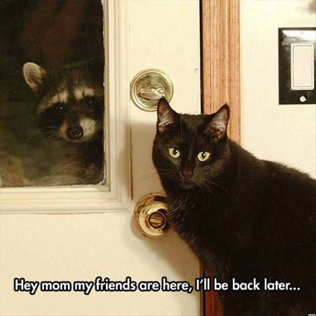 Funny Cats - Friends Are Here Ill Be Back Later (270 Pics)