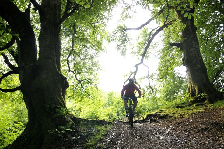 Trying out the mtb trails of Seven Stains in Scotland. Maby forest this