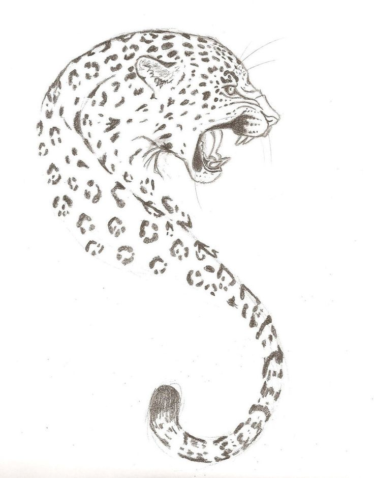 http://th08.deviantart.net/fs71/PRE/i/2010/030/c/e/Jaguar_tattoo_design_by_singsilver.jpg