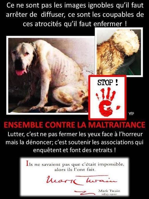 Causes: Animale, Humaine, Environnementale – Collections – Google+