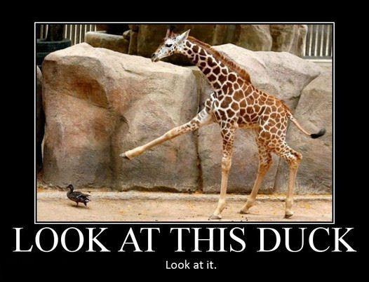 Funny Duck : Graphics20.com