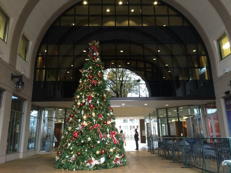 Thanksgiving is over, which means it's officially okay to watch Elf, listen to Michael Bublé's Christmas album on repeat and load up the car to go light-peeping. Here are 7 trees in Charlotte that you're not going to want to miss: Bank of America Stadium 800 South Mint Street Lighting status: Lit November 23 Daniel …