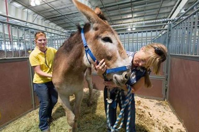 Hero Donkey Keeps Asses Safe During Raging WildfireDonkeys Tales, High Parks, Parks Fire, Donkeys Saving, Donkeys Credit, Heroes Donkeys, Rage Wildfire, Donkeys Pictures, Colorado Wildfire