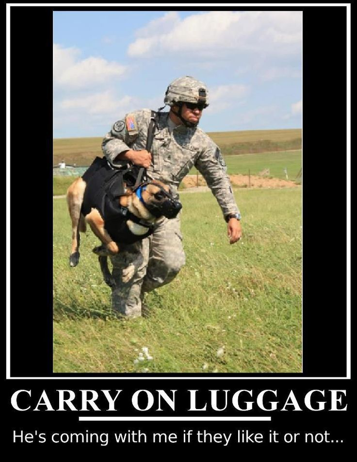 This is Staff Sgt. Carlos Paniagua, Patrol and Explosives Detection Dog Handler, 95th Military Police Battalion, K9 Detachment NCOIC, and MWD Rex F212. The picture was taken during a MEDEVAC training in Kosovo 2009.