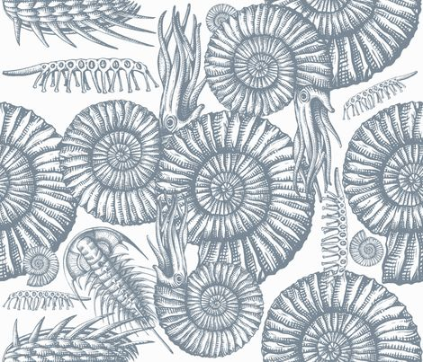 ammonite white and gray fabric by chicca_besso on Spoonflower - custom fabric