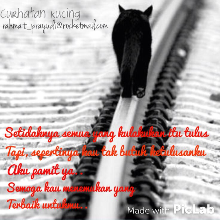 #cat #quots #curhatankucing #galau #kucing