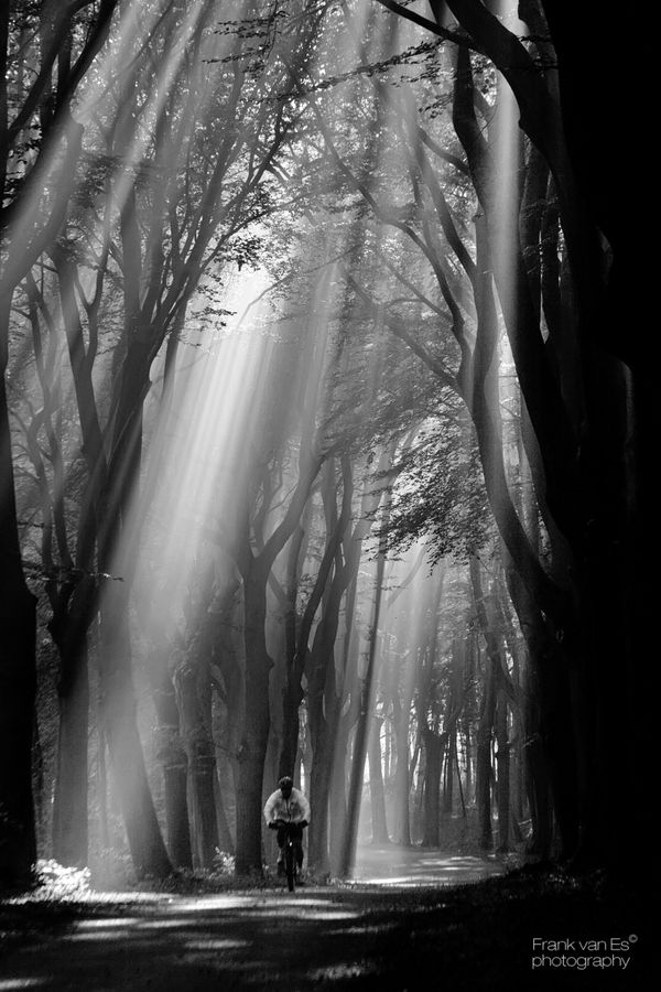 """♂ wood forest man bike Black & white photography """"Rays of light"""" by Frank van Es, sunbeams, trees, solitude, alone, peaceful, beauty of Nature, photo b/w"""