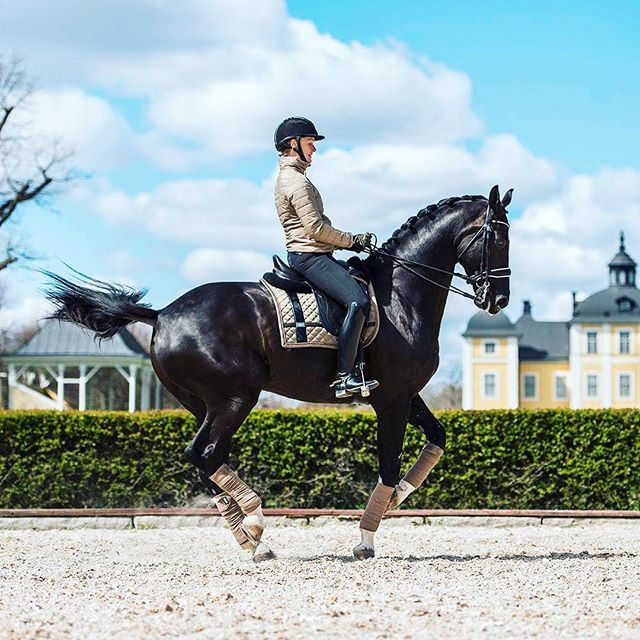 Piaffe in action ✨ The connection between these two are definitely special #equestrian #equestrianstockholm #horse #horses #equestrianperformance