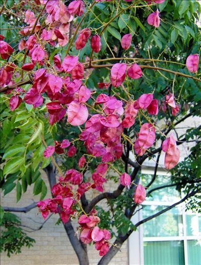 Brand new 103 best My Utah Flower Garden images on Pinterest   Flower  DN89
