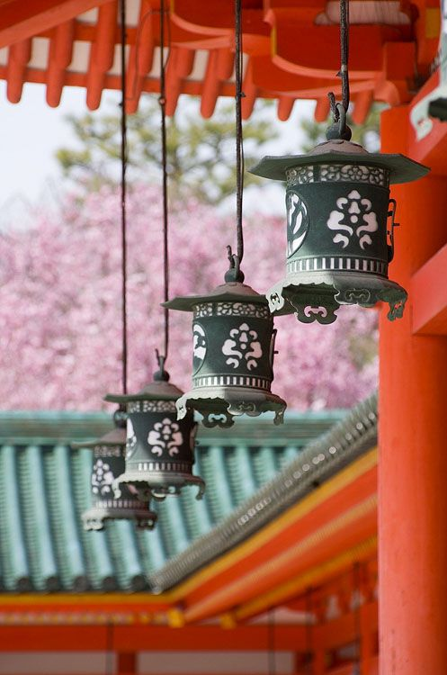 Lanterns with cherry blossoms at Heian Shrine, Kyoto, Japan