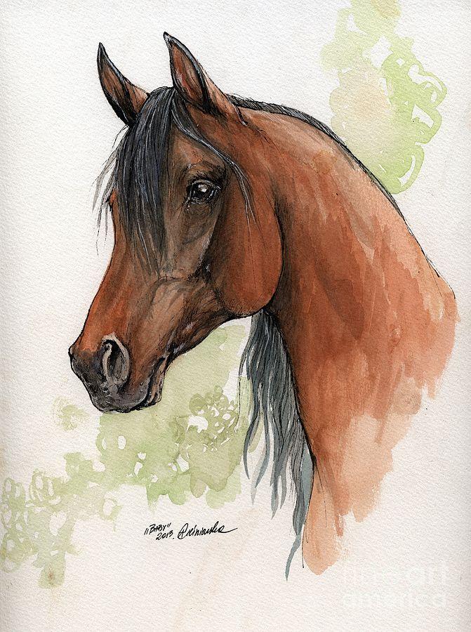 Bay arabian horse watercolor painting ~ Angel Tarantella