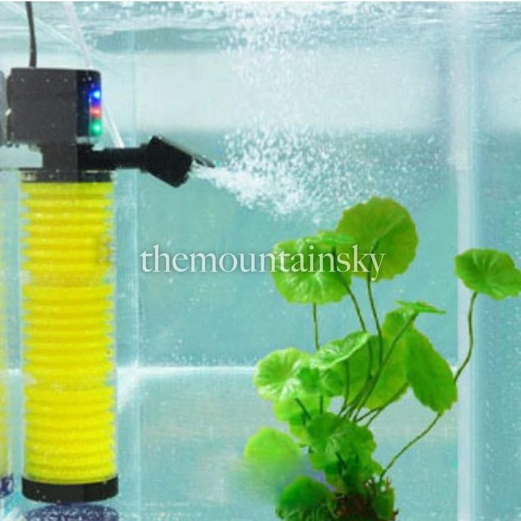 48 best images about fish tank filters on pinterest fish for Best water for fish tank
