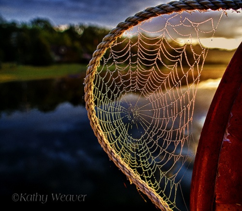 spider's web on a rope