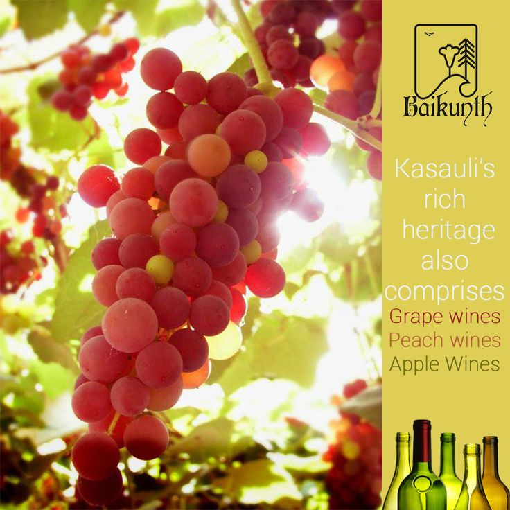 Since there are numerous orchards in this British colony, a variety of wine is produced locally and turns out to be quite cheap for one's pockets too. Some popular wines available in Kasauli comprise peach wine, apple wine and black grape wine.