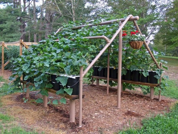 PVC cucumber trellis - I'm loving this for my friends who recently bought a property with LOTS of ground squirrels.