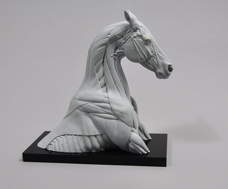 Horse Bust Anatomy Study by SLordArt on Etsy