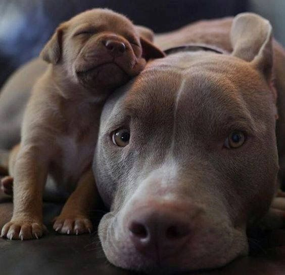 Oh what sweeties.  Please don't breed or buy while shelter animals die.  Please adopt, never shop and please support your local shelter and rescue groups.  Thanks!