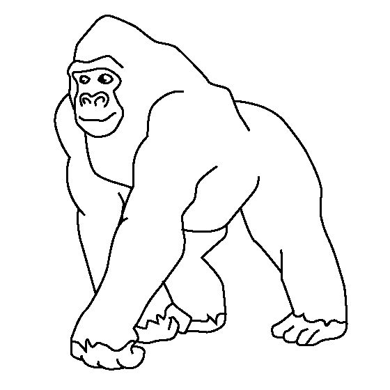 emperor tamarin coloring page gorilla coloring page - Animal Outlines For Colouring