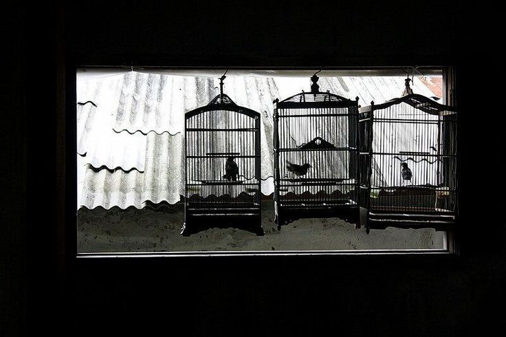 Birds in a cage. Bird's market in Malang.