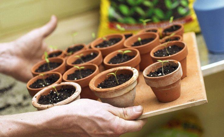 5 pflanzen die sie im januar auss en k nnen s en. Black Bedroom Furniture Sets. Home Design Ideas