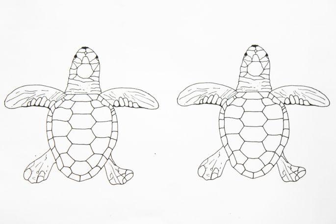 """ausmalbild a4 und a5 """"die grüne meeresschildkröte"""