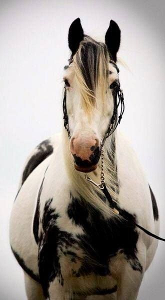 """Horse in wind. """"There is beauty in simplicity"""" Photo Credit unknown"""