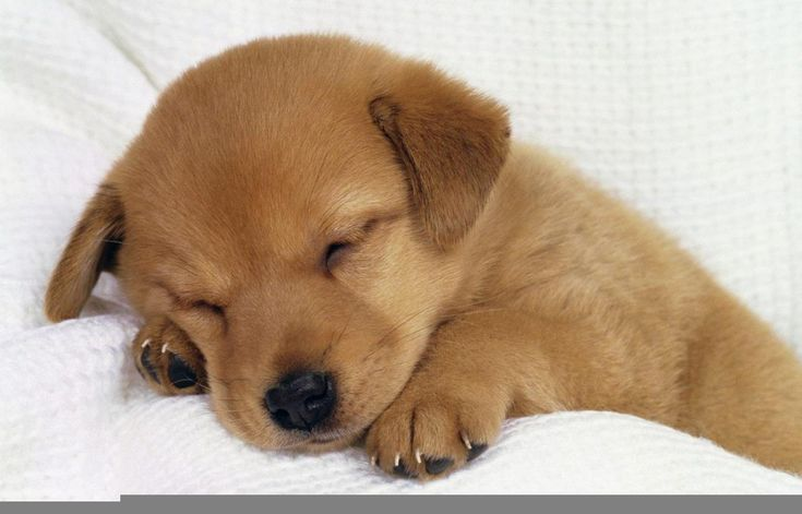 35 Cutest Dog Photo Ideas That're So Darn Adorable