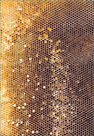 Design Textures Honeycombs                                                                                                                                                                                 More