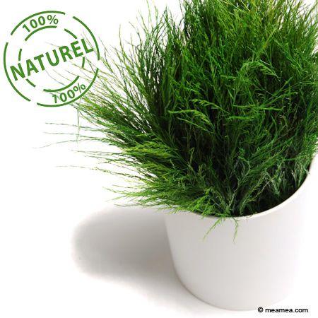 3 astuces naturelles pour aider vos plantes vertes à passer l'hiver