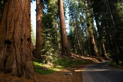 Belknap Campground in Giant Sequoia National Monument is located about 20 miles from Springville, California. This 13-site campground in the Sierras puts you among Giant Sequoias, providing a scenic, ...