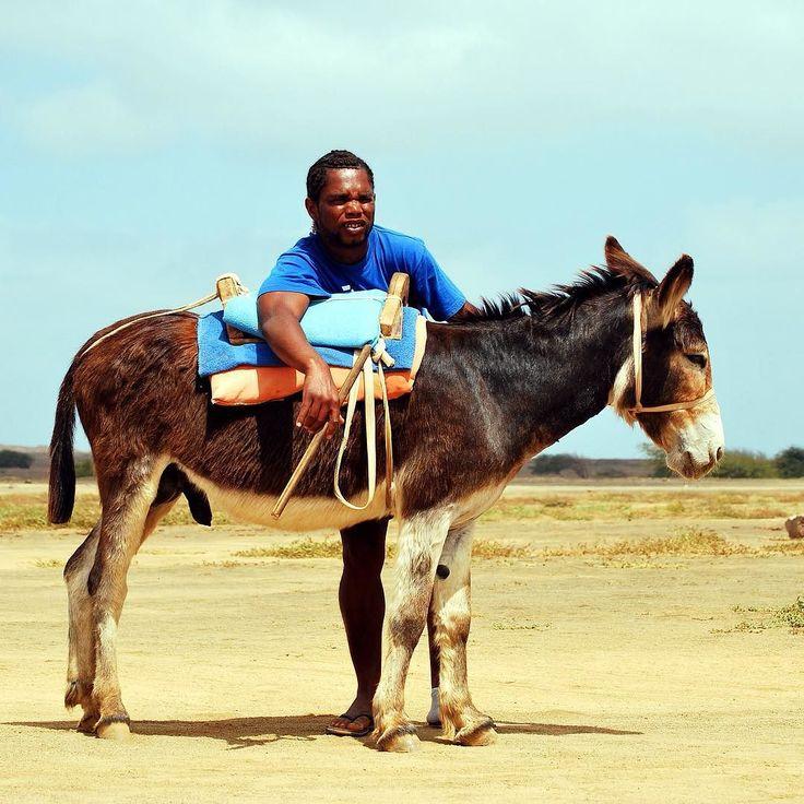A fauna terrestre de Cabo Verde é relativamente pobre mas os burros que encontrei na Ilha do Sal são muito giros! #burros #caboverde #ilhadosal #africa #viagens #viajar