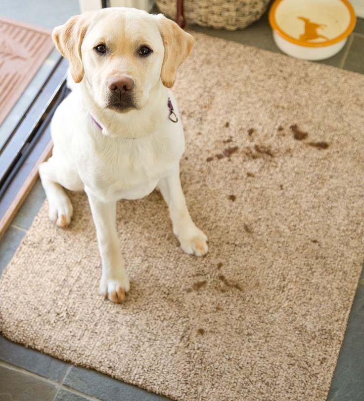Dog On The Rug: Floor-saving Microfiber Mud Rugs Absorb Water And Dirt