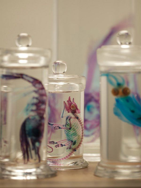 Preserved animal specimens. The protein in their bodies is turned invisible and their bones and cartilage infused with colour by Iori Tomita. How fascinating.