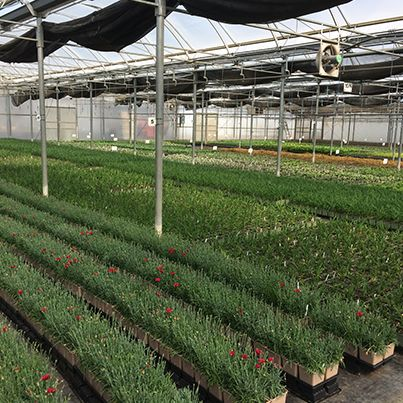 Plants for days at our Norval Farm!