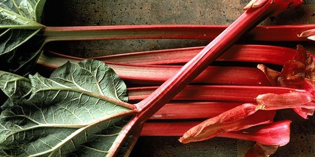 ​This simple rhubarb trick will take your summer to the next level  - countryliving.co.uk