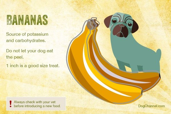 Fruits you can give to dogs