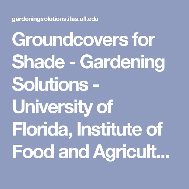 Groundcovers for Shade - Gardening Solutions - University of Florida, Institute of Food and Agricultural Sciences