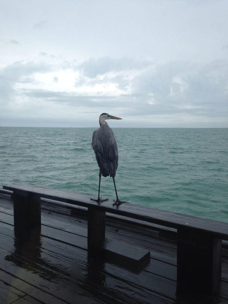 Egret on the pier