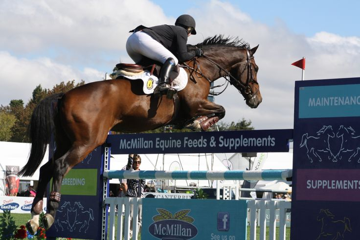 Catherine Cameron and Campione GNZ in the Norwood Gold Cup jumpoff - they finished fifth